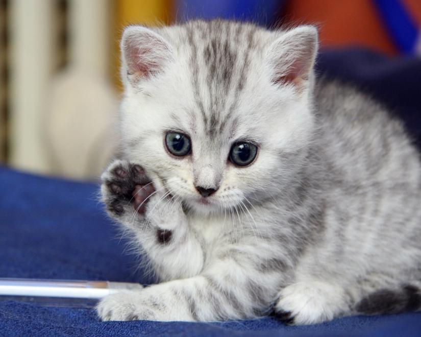 "Kitty says ""Hi!"""