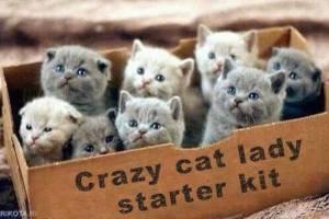 99359-crazy-cat-lady-starter-kit-mem-cbbj